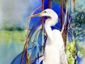 mangrove-sanctuary-giclee