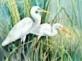 the-sanctuary-egrets-web-photo