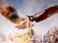 tree-of-life-osprey-web-photo