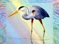 wading-great-blue-heron-web photo