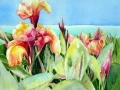 canna-botanica-web-photo